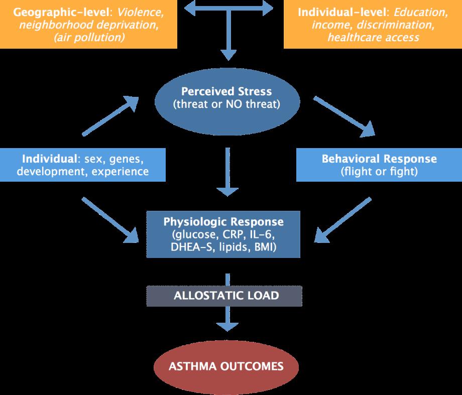 allostatic load asthma