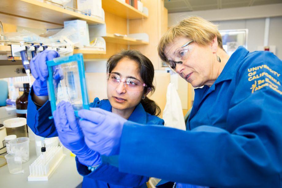 Kroetz and lab member examine a transparency