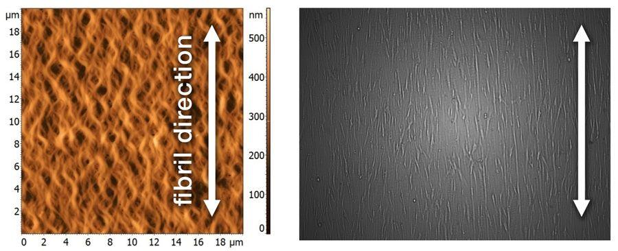 matrix nanotopography