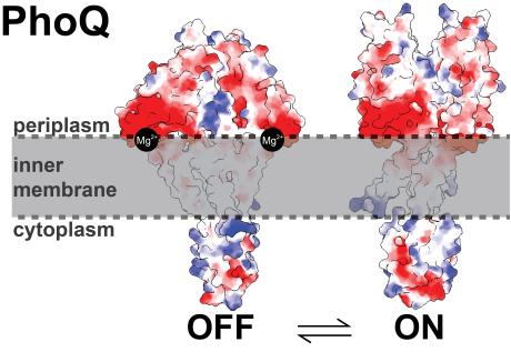 Bacterial signaling Figure