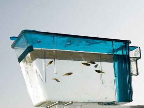 zebrafish tank